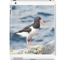 Oyster-catcher iPad Case/Skin