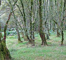 Mossy Woods by Eileen McVey