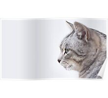 A Cat in Profile Poster
