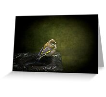 Solitary Finch Greeting Card