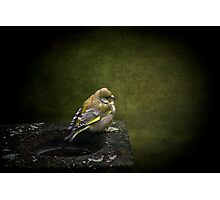 Solitary Finch Photographic Print