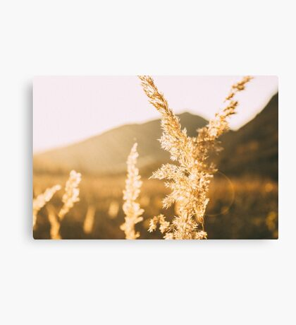 Rest In The Golden Light Canvas Print