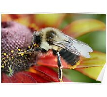 Mmmmm! Pollen is good today! Poster
