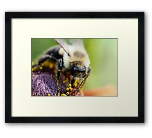 Arrgh! Let me wipe my face first! Framed Print