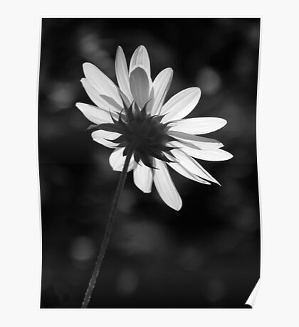 Beautiful Black And White Poster