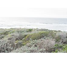 Brush on a Beautiful Day by the Oceanside Photographic Print