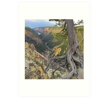 Grand Canyon of the Yellowstone, Wyoming Art Print
