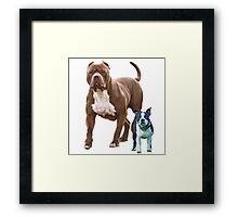 Pit bull Boston terrier Framed Print