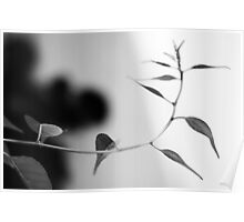 Simplistic and Elegant Black and White Nature Photograph Poster
