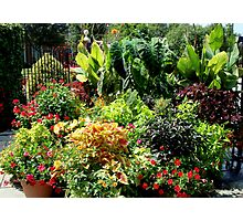 Container Garden     ^ Photographic Print