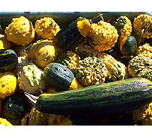 zucchini and gourds Photographic Print