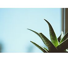 Simplistic Green and Blue Succulent Photograph Photographic Print