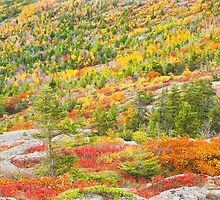 Fall coloor on Cadillac Mountain, Acadia National Park, Maine by KWJphotoart