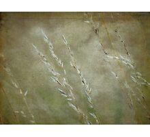 Wild Grasses 30 Photographic Print