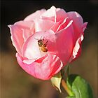 Rose And Bee by Chet  King