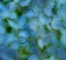 Paradise Blue by Tracy Deptuck
