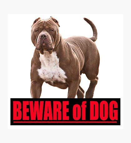 Beware of dog pit bull Photographic Print