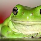 love  this    frog by Trish Threlfall