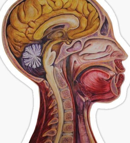 Sagittal Slice  Sticker