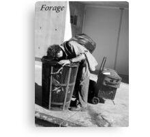 Forage Metal Print