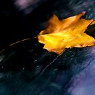 Plastered By Rain by TB-Photography-