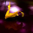 Autumn Leaf by TB-Photography-