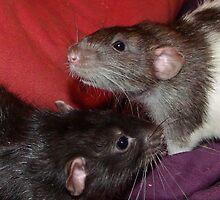 Dumbo rat brothers by mindgoop