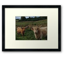 Highland Cows Framed Print