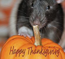 Happy Thanksgiving with Lance the Rat by Keala