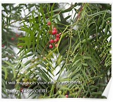 Pepper Corns on Outback Pepper Tree Poster