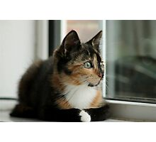Tiny Purrfection Photographic Print