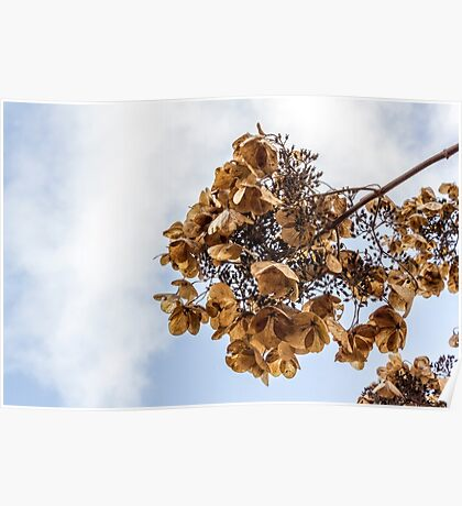 Cherry Blossoms in Fall Poster