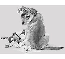 Cute puppy mixed breed with teddy dog realist art  Photographic Print