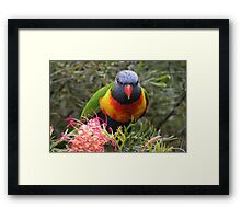 """""""That's MY Coconut Ice!"""" Framed Print"""
