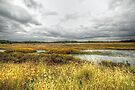 Autumn Salt Marsh - Bombay Hook National Wildlife Refuge - Delaware - USA by MotherNature