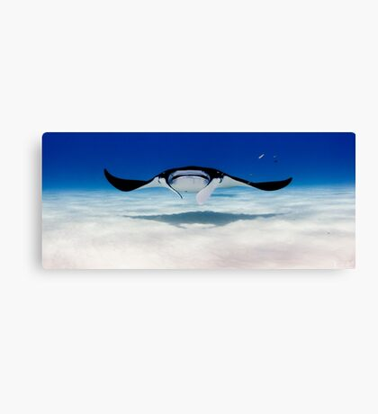 Head On with a Manta Ray Canvas Print