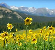Colorado Wildflowers by Danielle Marie Photography