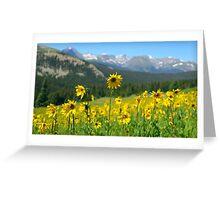 Colorado Wildflowers Greeting Card