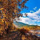 illecillewaet greenbelt autumn   by RevelstokeImage