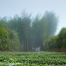 Mist over the Bamboo Grove  by Alex Fricke