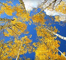 Aspen Filled Sky by Danielle Marie Photography