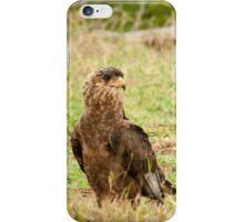 Goshawk Falcon iPhone Case/Skin