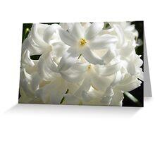 White Hyacinths Greeting Card