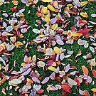 My Lawn in the Fall by AnnDixon