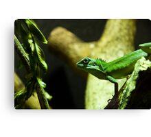 Green lizard Canvas Print