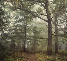Into the Woods by Sarah Jarrett