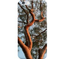 Eucalypt at Sunset iPhone Case/Skin