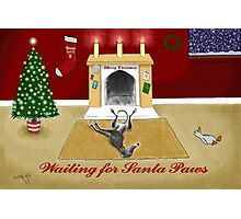 Waiting For Santa Paws Photographic Print
