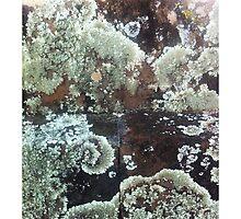 Lichen growing on a headstone in Maui by iADDEY