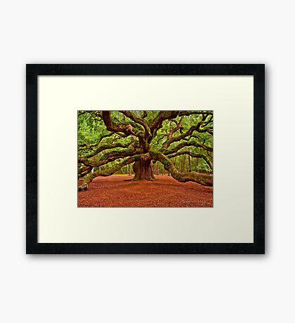 Angel Oak Arms Open Wide Framed Print